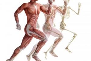 Суставы - опора нашего тела