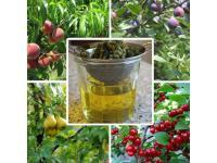 Народные средства из листьев популярных плодовых кустарников